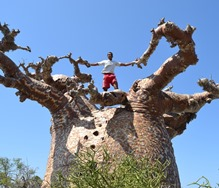Jaymal climbs a Baobab, the national tree of Madagascar